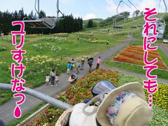 4ゆり園.jpg