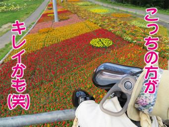 5ゆり園.jpg