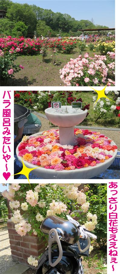 バラ噴水.jpg