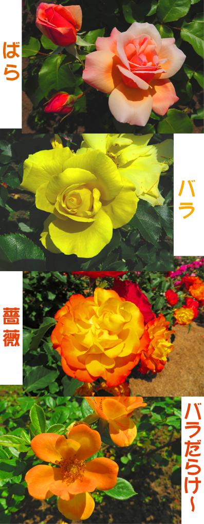 薔薇だらけ.jpg