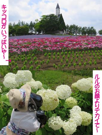 4花畑.jpg