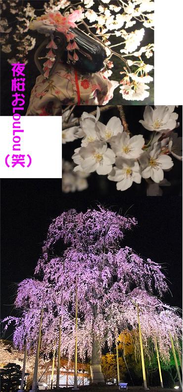 東寺夜桜.jpg